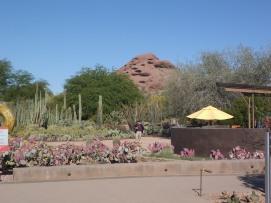 arizona-both-january-and-april-019